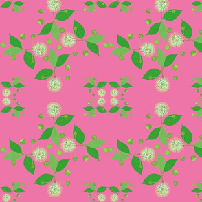 2941 Australian-Buttonbush-Pink-Cool