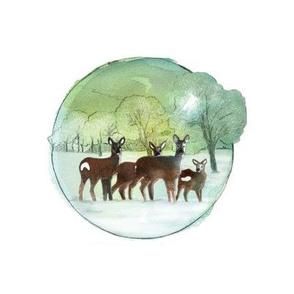 Winter Deers