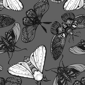 Grey Moths Small