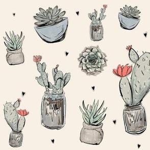 gentle succulents