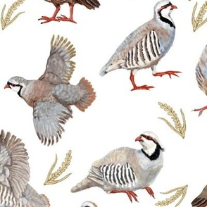 Partridges On White