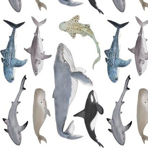 whales and sharks (rotated)
