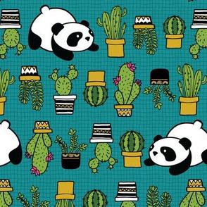 Panda and Cacti