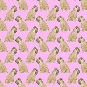 Sitting Wheaten Terriers - pink