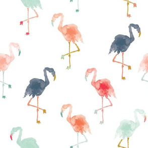 IBD Flamingos C