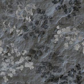 Fern Fossils in Grey Slate