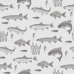 Fish Freshwater Gray Small