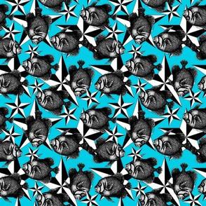 blue_star_layered_fish