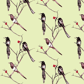 one for sorrow, two for joy......(cherry dawn)