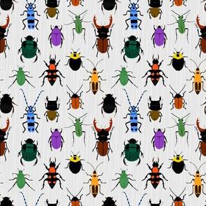Endangered Beetles