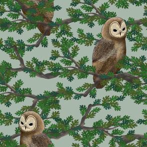 Woodland Owl (blue)