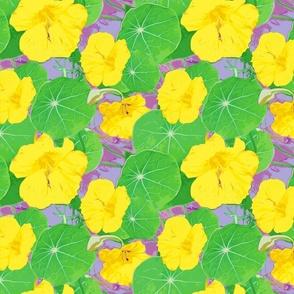 Nasturtiums yellow