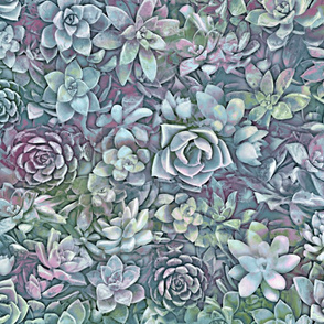 succulent graphic greys