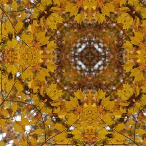 autumn_leaves_square