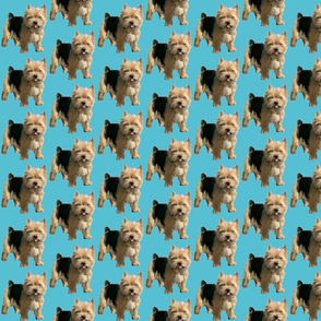 Norwich Terrier fabric small