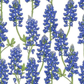 Large Scale Texas Bluebonnet Botanical Illustration