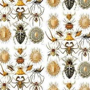 Haeckel Arachnida Spiders