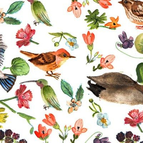 Birds and wildflowers v2