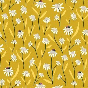 Daisies in a yellow land