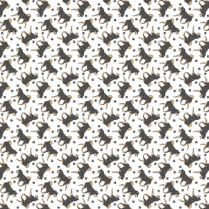 Trotting black and tan Shiba Inu and paw prints - tiny white