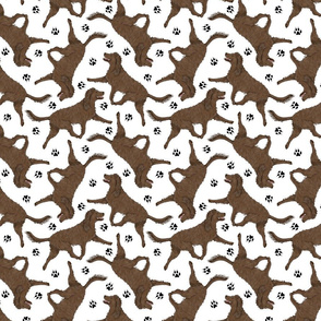 Trotting American Water Spaniel and paw prints - white