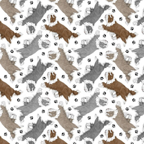 Trotting Bearded Collies and paw prints - white