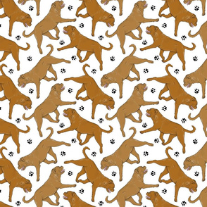 Trotting Dogue de Bordeax and paw prints - white