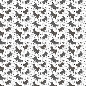 Tiny Trotting Karelian Bear dogs and paw prints - white