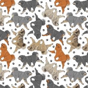 Trotting Tibetan Mastiffs and paw prints - white