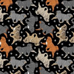 Trotting Tibetan Mastiffs and paw prints - black