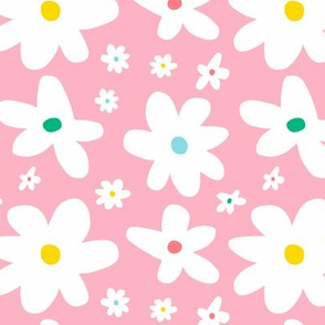 Pastel pink daisy flowers
