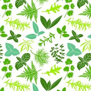 Farm fresh culinary herbs on white seamless pattern vector. Salad mix cooking seasonings.