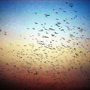 Birds in flight one