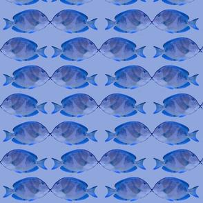 Sea of Love Blue Tang
