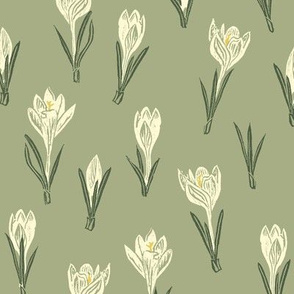 cream-colored crocuses on sage green