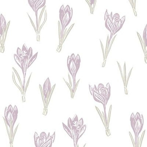 lilac crocuses on white