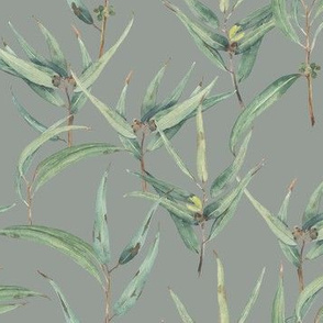Eucalyptus - grey