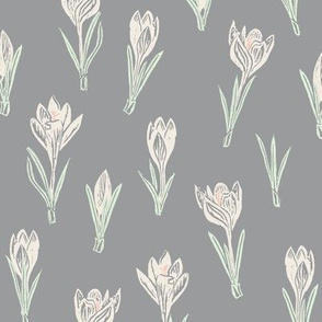 cream-colored crocuses on grey