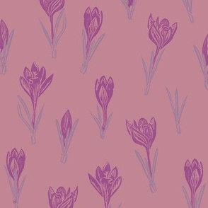 purple crocuses on pink