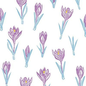 lavender and light blue crocuses
