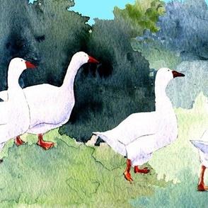 Roman Geese