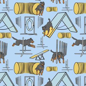 Simple tailed Rottweiler agility dogs - blue