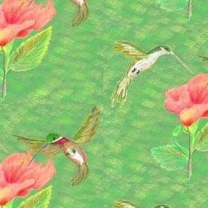 hummingbird time