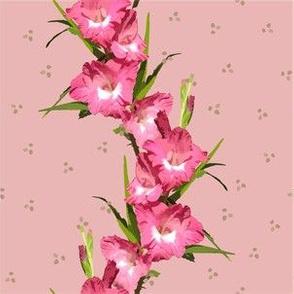 Pink Gladiolus Polka Stripe