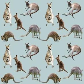 Kangaroo Capers
