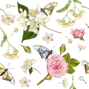 Jasmine, roses &  butterflies