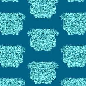 Blue British Bulldog