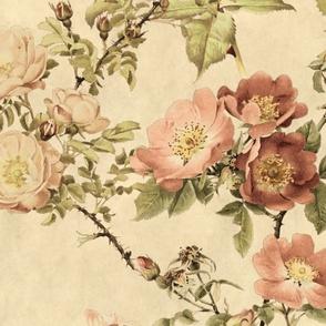 Watercolor English Rose ~ Parchment