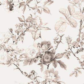English Rose ~ Watercolor ~ Sepia
