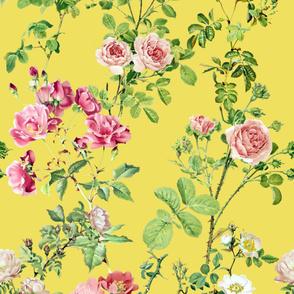 Watercolor English Rose ~ Victoria's Garden on Aristocrat  _